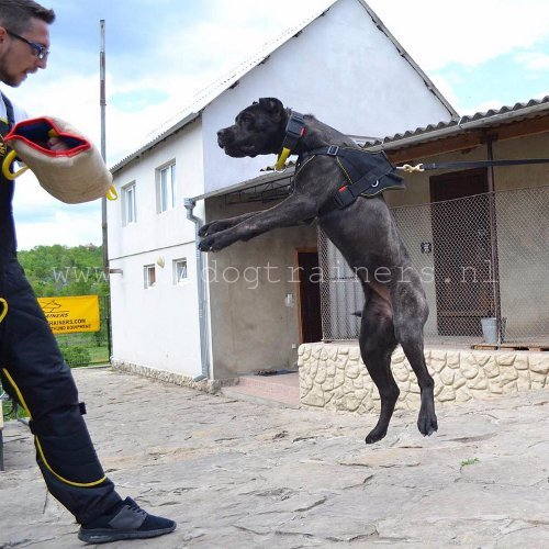 KNPV honden training