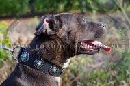 Pitbull hondenhalsband van leer met blauwe stenen | Extra breed