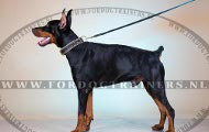 Dobermann Lederen halsband met Messing Spikes