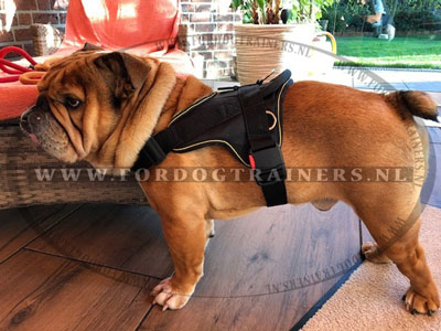 Nylon Tuig voor Engelse bulldog Training en Wandelingen