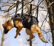 Takeltuig voor werkhonden | Grote en middelgrote honden