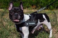 Nylon Honden Tuig voor SAR voor Franse Bulldog