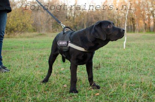 zwart-hond-met-tuig